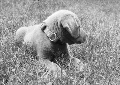 Beautiful puppy Luna